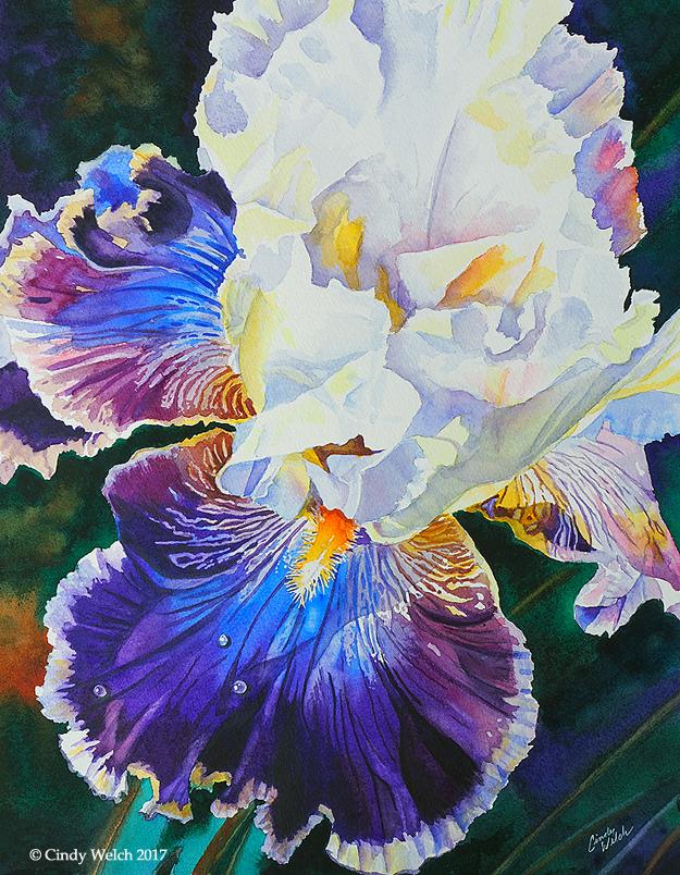 """""""Purple Iris"""""""